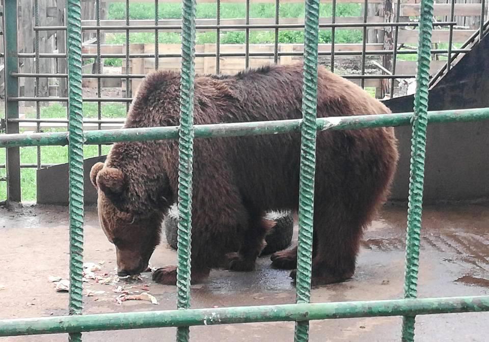 В Бурятии бизнесмены и крупные компании взяли под крыло животных из Этнографического музея