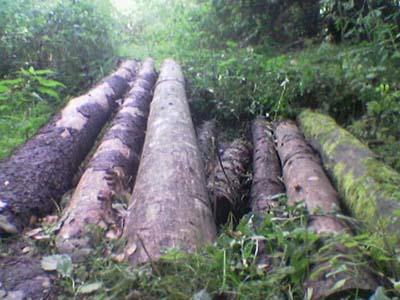 Закон о бесплатном лесе на строительство