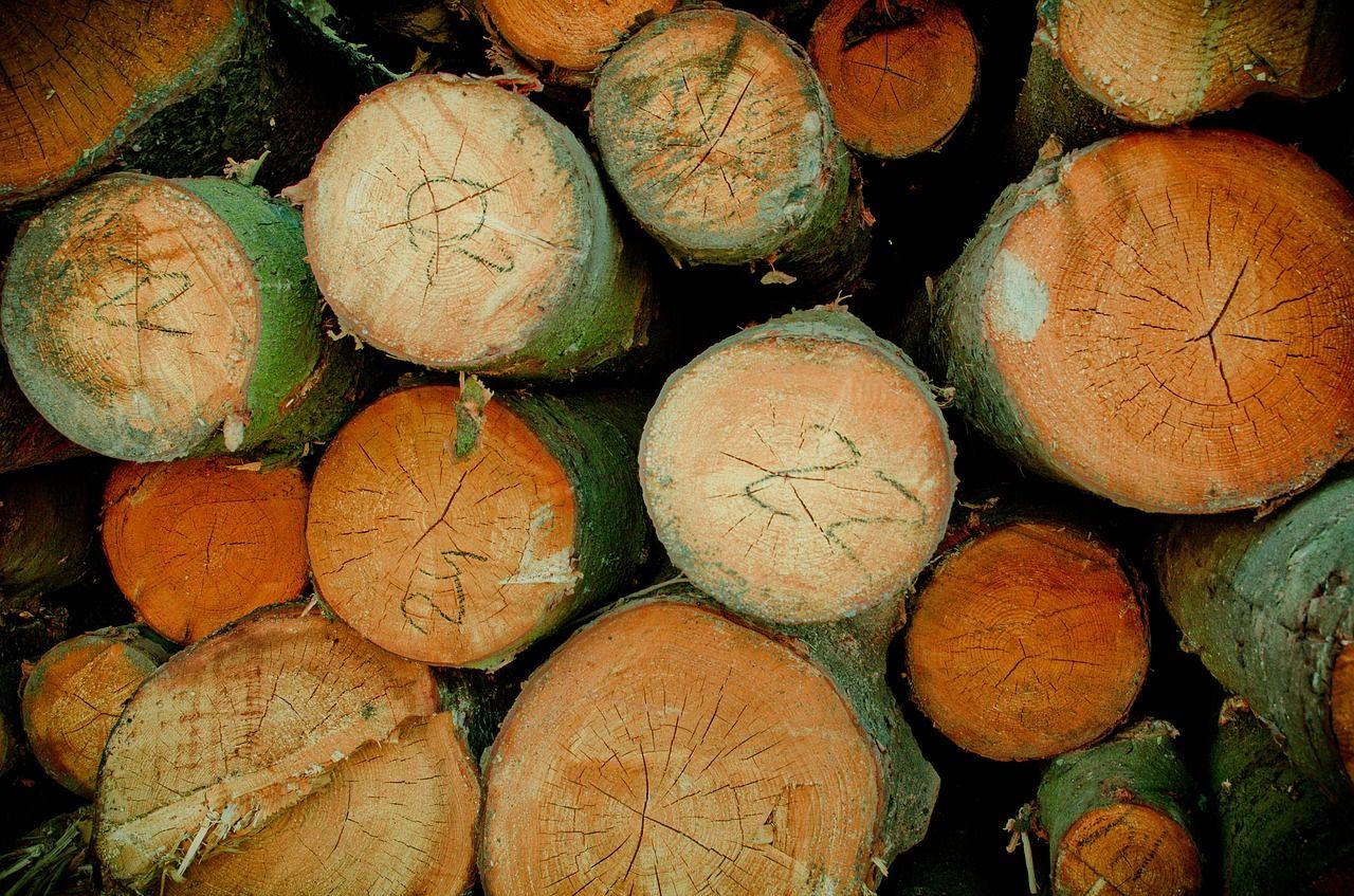 Житель Бурятии незаконно рубил лес