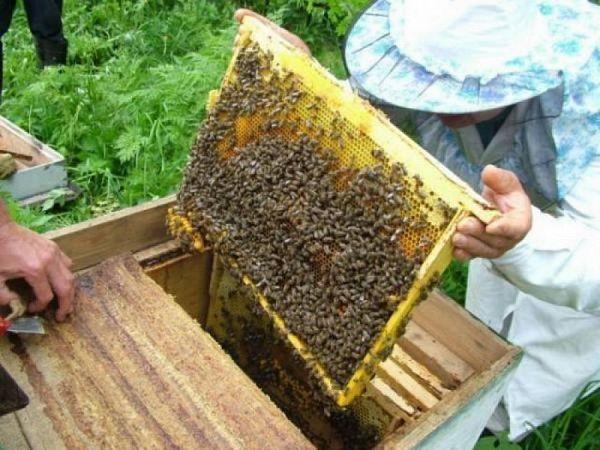 Пчеловодство идеи для бизнеса бизнес план нормативные документы