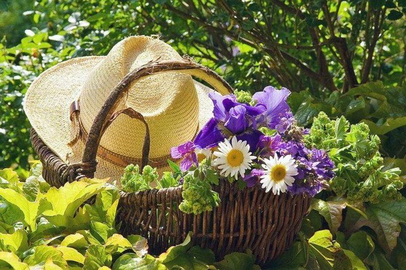 Какие цветы можно посадить в августе на даче, корзины для букетов из конфет своими руками
